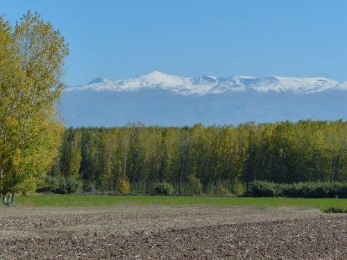 Panorámica del paisaje que puede verse desde el Cortijo de Daimuz, con los típicos cultivos de vega y Sierra Nevada como fondo escénico.