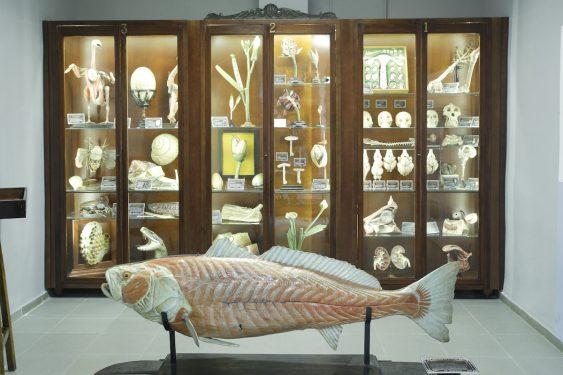 Modelos anatómicos realizados por el Dr. Auzoux, ubicados en el Museo del Instituto Padre Suárez, en Granada.